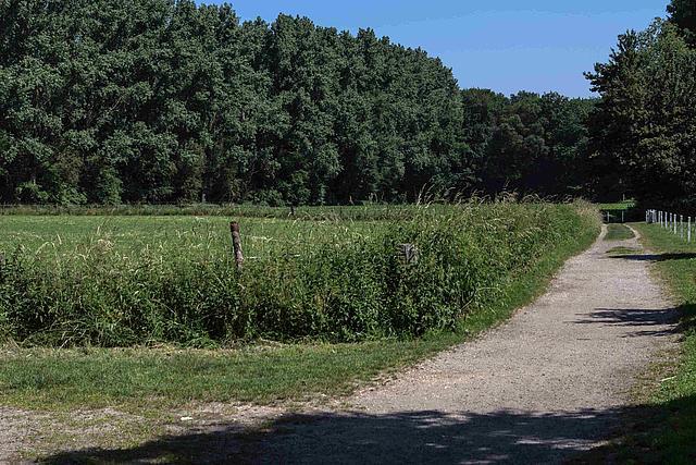 Radweg zwischen Weide und Waldrand