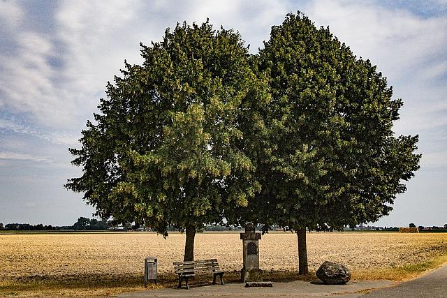 Zwei Bäume, eine Bank und ein Wegestock am Pescher Feld.