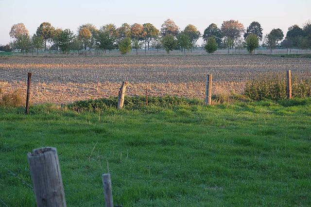 Umzäunte Weide bei Schlich vor Stoppelfeld und Allee