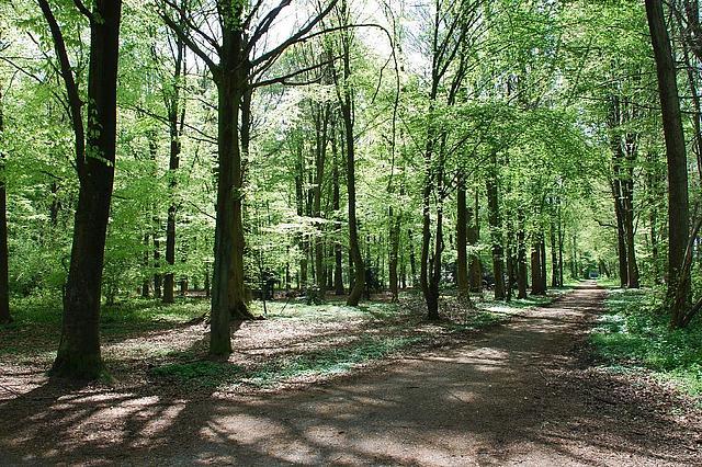 Blick in einen Laubwald durch den ein Waldweg führt.