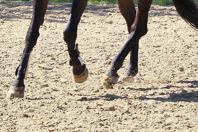 Detailaufnahme: Pferdebeine