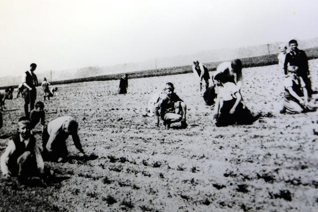 Kinder hockend und knieend bei der Feldarbeit