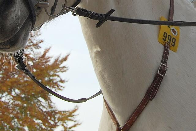 Nahaufnahme: Pferdehals mit Zügeln und Reitplakette