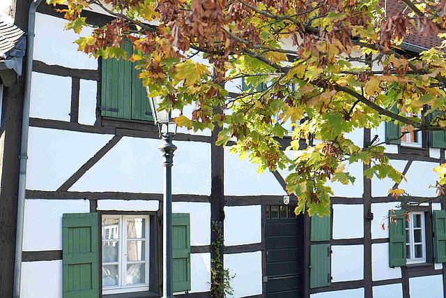 Detail Fachwerkhaus Liedberg mit Herbstbaum