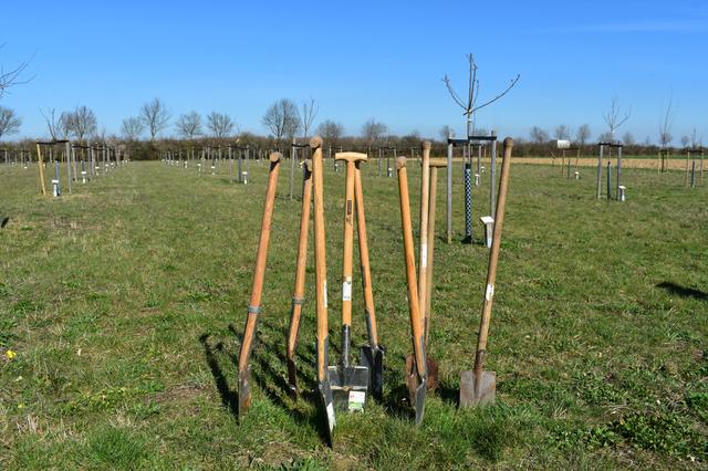 Mehrere Spaten im Kreis aufgestellt auf der Hochzeitswiese mit jungen Bäumen im Hintergrund