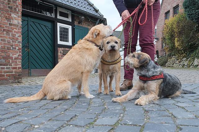 drei Hunde an der Leine vor dem Sandbauernhof Liedberg