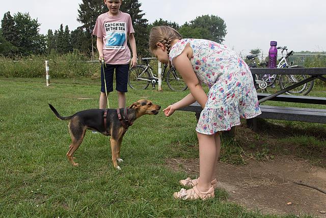 Ein Mädchen und ein Junge spielen mit einem Hund